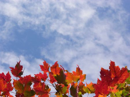 Colorful fall leaves and blue sky with clouds photo