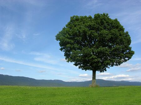 Landscape scenery with solitary tree Stock Photo - 3880376