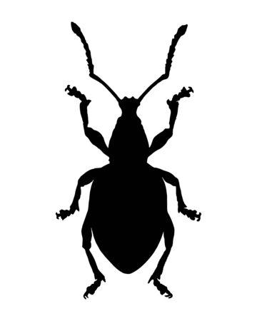 curculionidae: Weevil (Curculionidae)