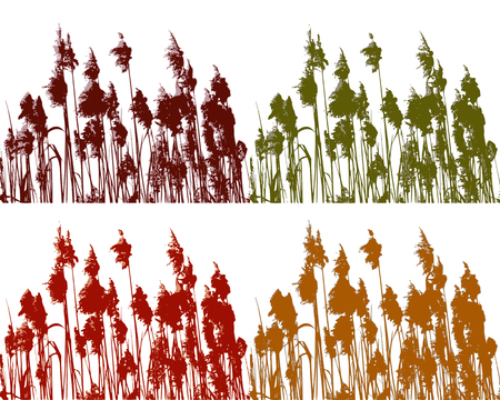 Reed in four colours Vector