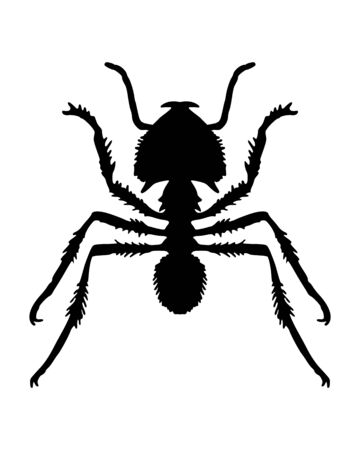 formicidae: Ant