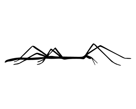 stick bug: Stick insect