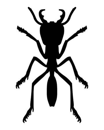 entomology: Ant