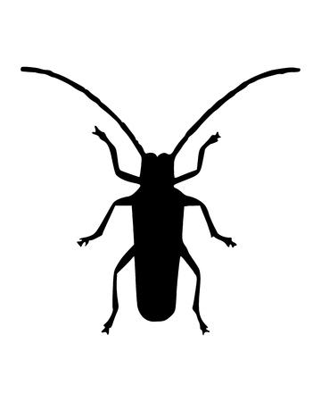 horn beetle: Long horn beetle