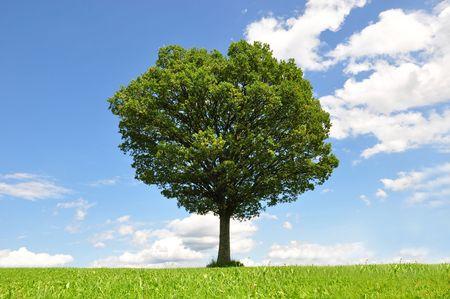 Solitary tree Stock Photo - 5453575