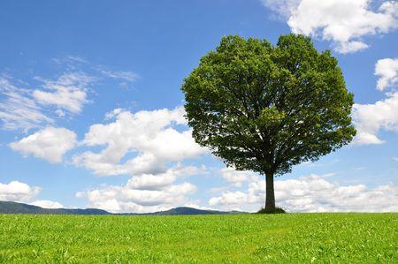 Solitary tree Stock Photo - 5496713