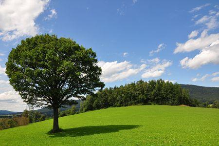 Solitary tree Stock Photo - 5535791