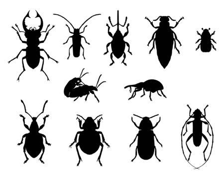 escarabajo: Colecci�n de insectos Vectores