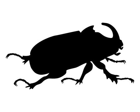 scarab: Rhinoceros beetle