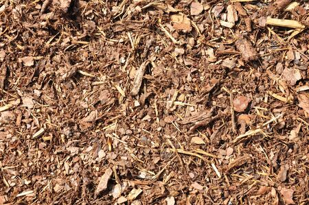bark mulch: Bark mulch Stock Photo