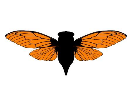 cicada: Beautiful cicada