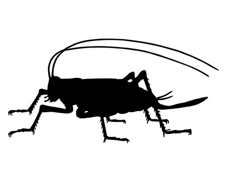 cricket insect: Cricket silhouette Illustration