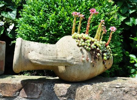 Houseleek flowers (Sempervivum) in flagon photo