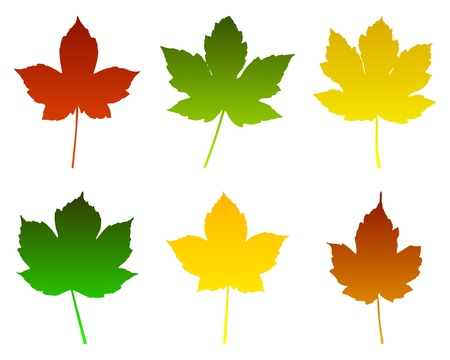 acer: Maple leaves