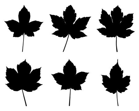 Maple leaves Stock Vector - 10056099