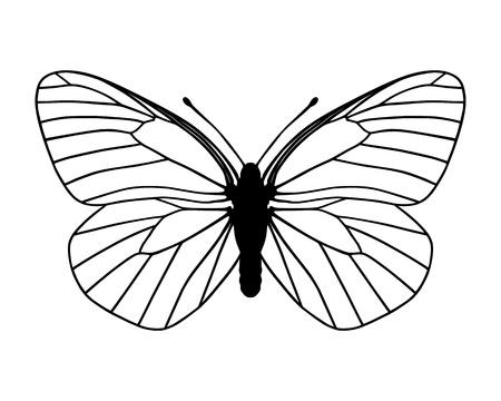 silhouette papillon: Papillon blanc