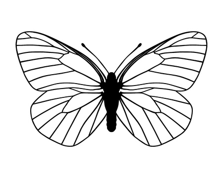 butterfly silhouette: White butterfly Illustration