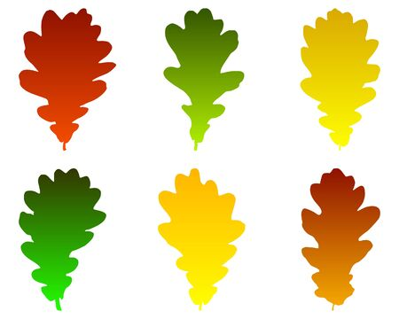 foglie di quercia: Foglie di quercia Vettoriali