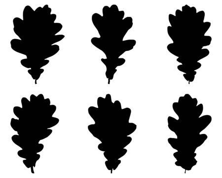 quercus: Oak leaves