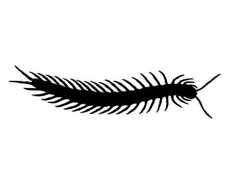 arthropod: Centipede