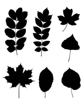Various leaves Vector