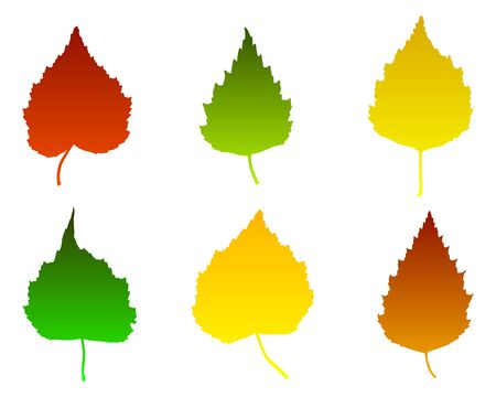Birch leaves Vector