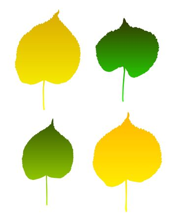 Lime leaves Vector