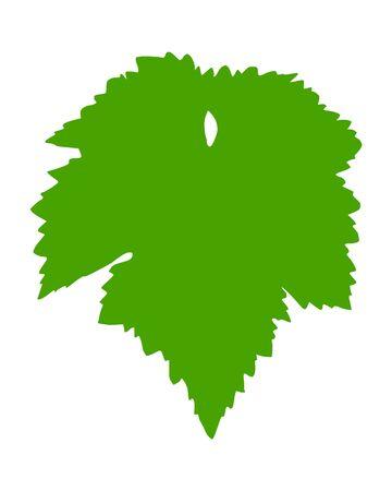 vitis: Vine leaf Illustration