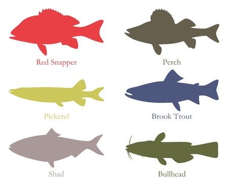 North American food fish Illustration