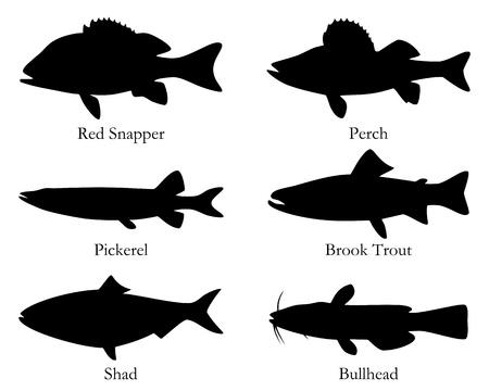 comida americana: Am�rica del Norte pescado para consumo humano Vectores
