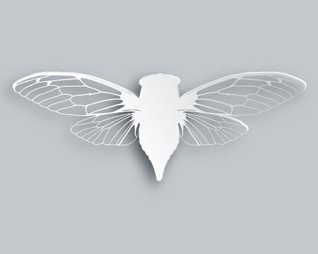 cicada: White cicada