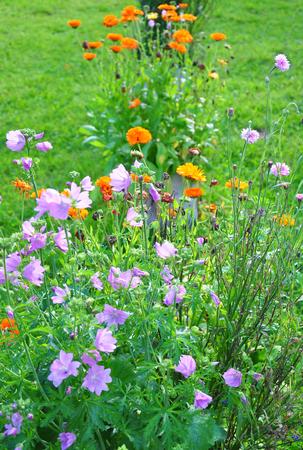 garden cornflowers: Flower bed Stock Photo