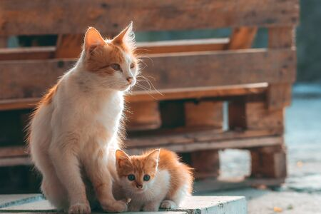 Cat mom with her kitten. Concept of motherhood, child care and love. Homeless mother with her baby on street. Frightened little white and red kitten cuddles to cat.
