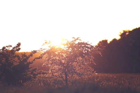 Blooming little tree in bright sunny backlight at beautiful dawn - toned colors - inspirational and nature concept with copy space for text