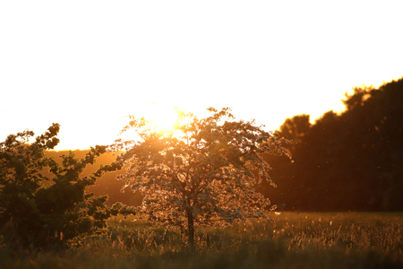 Blooming little tree in bright sunny backlight at beautiful dawn - inspirational and nature concept with copy space for text