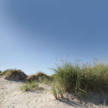 view on sand dune with grass on seaside in front of beautiful blue sky- square layout with copy space for text