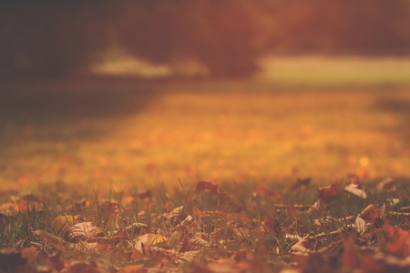 green meadow in bright morning sunlight with first autumn leaves - background blanked out blurry 版權商用圖片