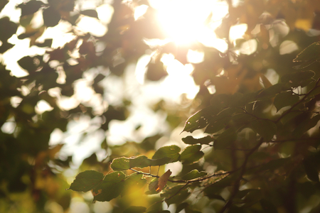 view on branches and leaves of a lime tree in bright sunlight with first signs of autumn - background blanked out blurry 版權商用圖片