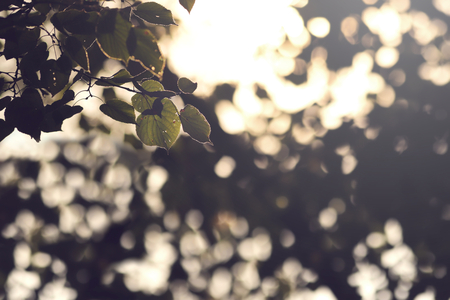 view on a branch with leaves of a lime tree in bright sunlight in front of blurred foliage - background blanked out blurry, matte look 版權商用圖片