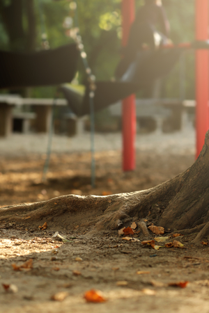 roots of an old tree standing on a plyground for children of an elementary school in bright sunny light - portrait orientation - background blanked out blurry 版權商用圖片
