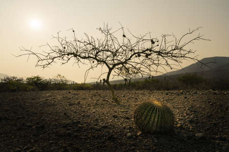 Tree silhouette and cactus in the desert morning