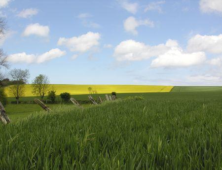 A rape field in the sunshine Reklamní fotografie
