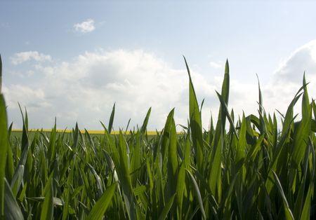 Looking trough grass Reklamní fotografie