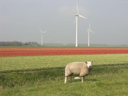 dutch landscape Reklamní fotografie