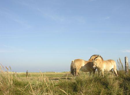 horse Reklamní fotografie - 261434