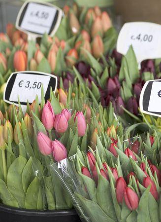 entrepreneurial: tulips Stock Photo