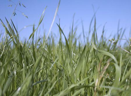 grass Stock Photo - 414863
