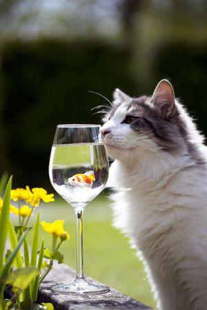 a cat and a goldfish in a wine glass Reklamní fotografie