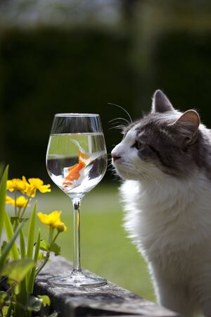 a kat and a goldfish in a wine glass Stock Photo - 6898989