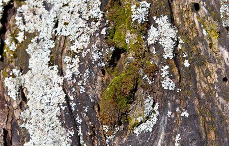 crazing: Wooden cortex texture